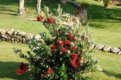 Fiori, piante e prati